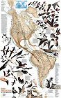 Poster Nature: Bird Migration Map. Please click the image to see the item sheet.